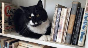 Book-shelf-2-1_R