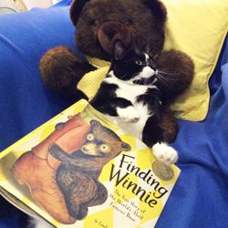 """""""Finding Winnie, The True Story of World's Most Famous Bear""""written & book Illustrated by Lindsay Mattick"""