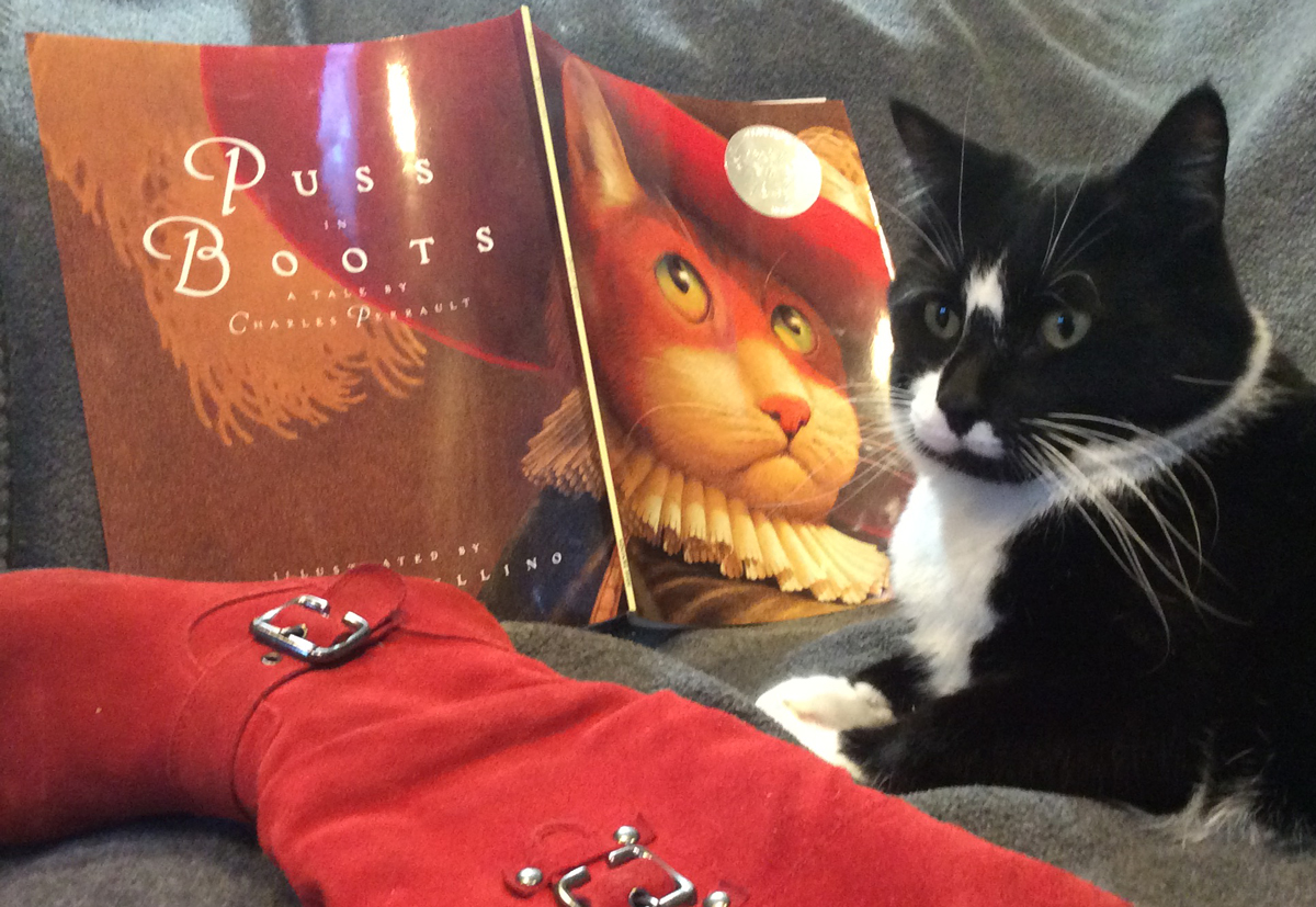 Teddy With Puss and Boots book